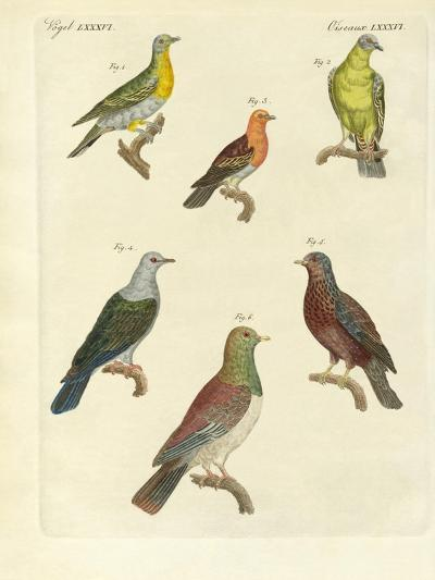 Different Kinds of Exotic Pigeons--Giclee Print
