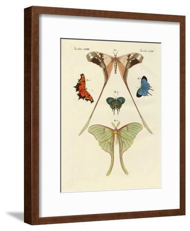 Different Kinds of Foreign Butterflies--Framed Giclee Print