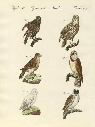Different Kinds of Foreign Owls--Giclee Print