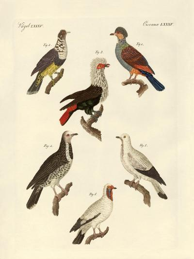 Different Kinds of Foreign Pigeons--Giclee Print
