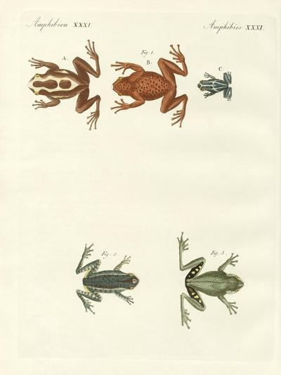 Different Kinds of Foreign Tree Frogs--Giclee Print