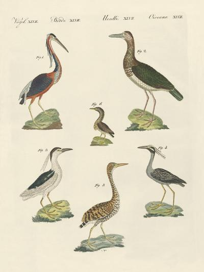 Different Kinds of Herons--Giclee Print