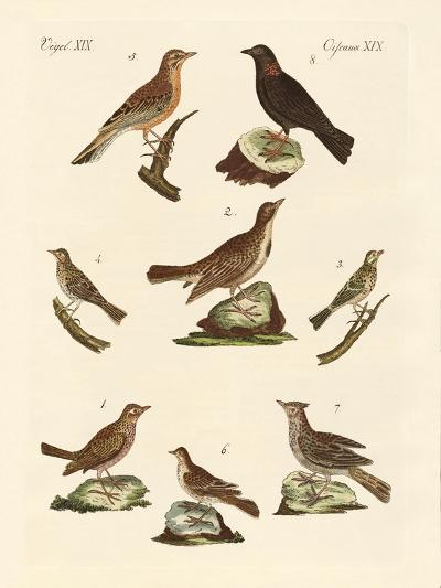 Different Kinds of Larks--Giclee Print