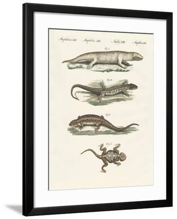 Different Kinds of Lizards--Framed Giclee Print