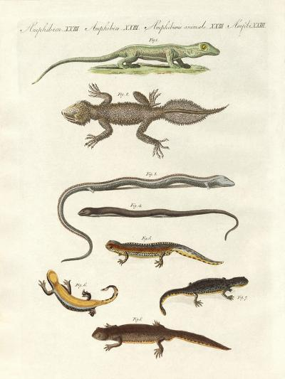 Different Kinds of Lizards--Giclee Print