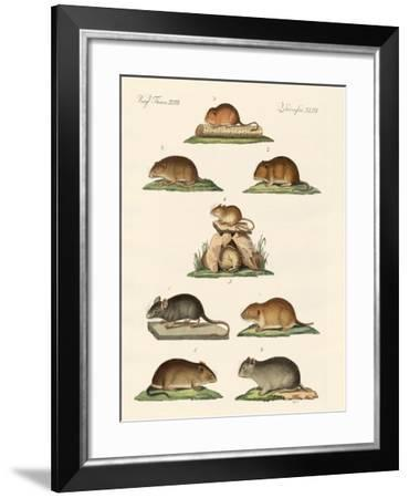 Different Kinds of Mice--Framed Giclee Print