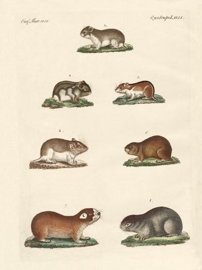 Different Kinds of Mice--Giclee Print