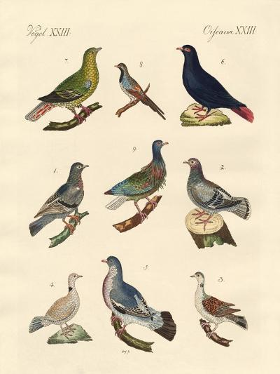Different Kinds of Pigeons--Giclee Print