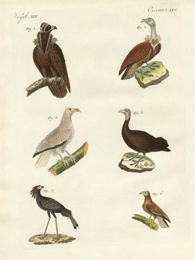Different Kinds of Raptors--Giclee Print