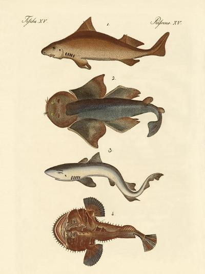 Different Kinds of Sharks--Giclee Print