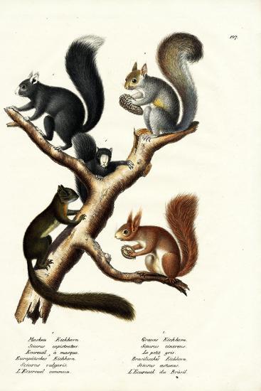 Different Kinds of Squirrels, 1824-Karl Joseph Brodtmann-Giclee Print