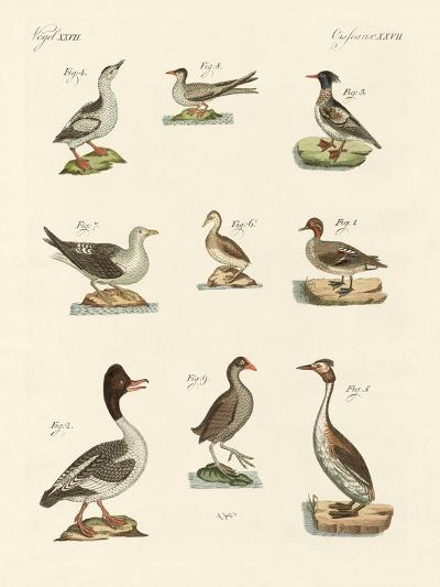 Different Kinds of Waterbirds--Giclee Print