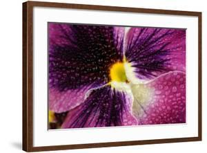 Beautiful Purple Pansy Violet Flower with Water Drops by Digidesign