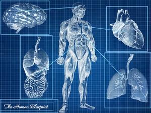 Human Blueprint by Digital Storm