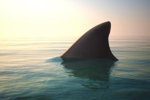 Shark Fin above Ocean Water by Digital Storm