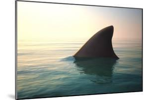 Shark Fin above Ocean Water by Digital Storm