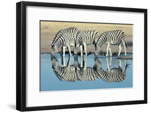 Burchells Zebra (Equus Burchelli) Drinking at Waterhole, Etosha, Namibia by Digital Vision.