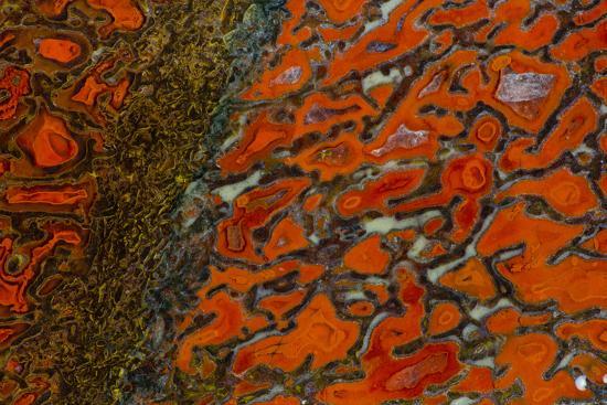 Dinosaur Petrified Bone-Darrell Gulin-Photographic Print