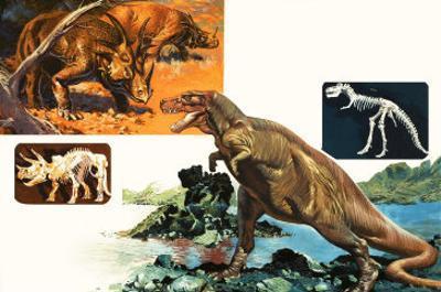 Dinosaurs and Skeletons. Stegasaurus and Tyranosaurus