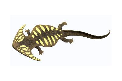 Diplocaulus Amphibian from the Prehistoric Era-Stocktrek Images-Art Print
