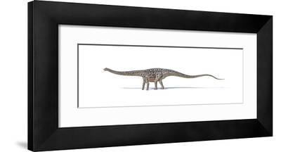 Diplodocus Dinosaur on White Background