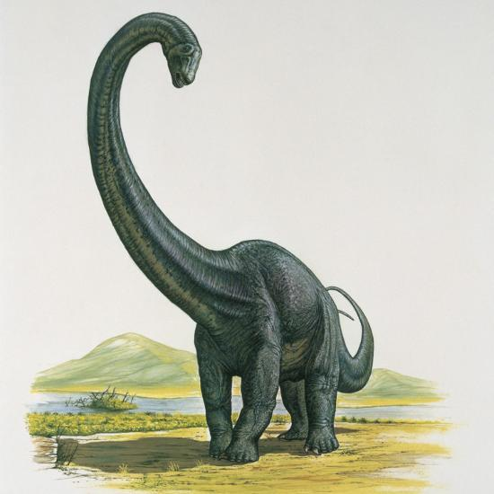 Diplodocus Dinosaur Standing Near a River--Photographic Print