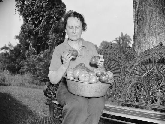 Director of the Mint Nellie Tayloe Ross relaxes on her Maryland farm, 1938-Harris & Ewing-Photographic Print