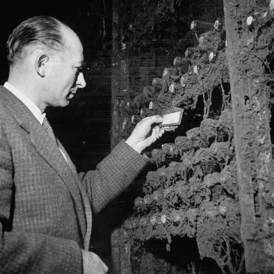 Director Yoes Kressmann, Looking at the Chateau Lafite Kept for His Own Personal Consumption--Photographic Print