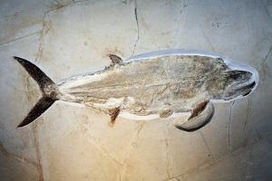 Fish Fossil by Dirk Wiersma