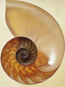Nautilus Shell by Dirk Wiersma