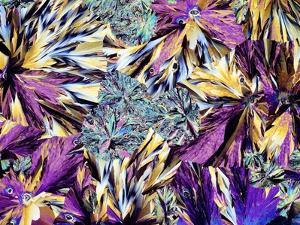 Paracetamol Crystals, Light Micrograph by Dirk Wiersma