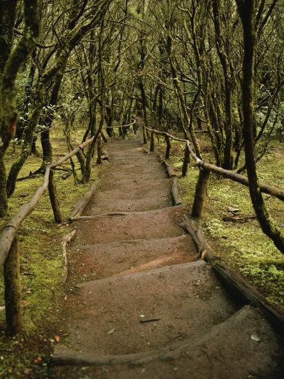 Dirt Hiking Path Through the Garajonay National Park on La Gomera-xPacifica-Photographic Print