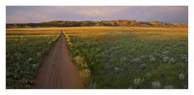 Dirt road and Globemallows Salt Valley, Arches National Park, Utah-Tim Fitzharris-Art Print