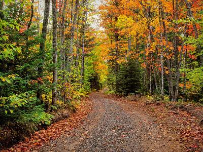Dirt road passing through a forest, Keweenaw Peninsula, Upper Peninsula, Alger County, Michigan...--Photographic Print
