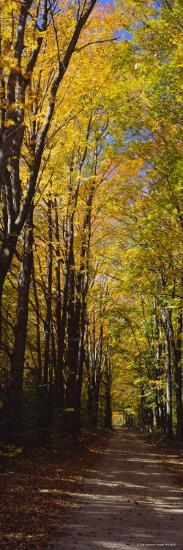 Dirt Road Passing Through a Forest, Sleeping Bear Dunes National Lakeshore, Empire, Michigan, USA--Photographic Print