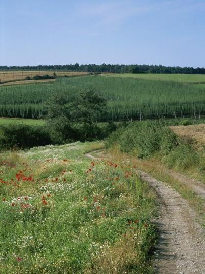 Dirt Road Running Past Hop Fields outside Munich-Taylor S^ Kennedy-Photographic Print