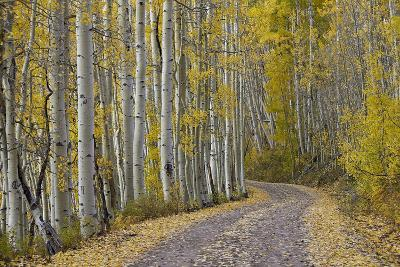 Dirt Road Through Yellow Aspen in the Fall-James Hager-Photographic Print