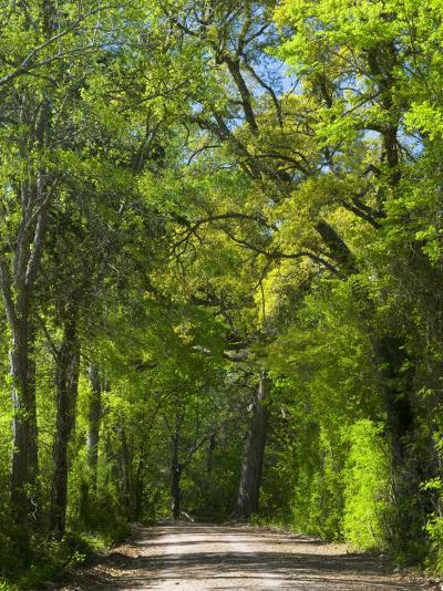 Dirt Roadway Overhanging with Greens of Oak Trees Near Independence, Texas, USA-Darrell Gulin-Photographic Print