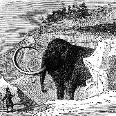 Discovery of a Woolly Mammoth, 1779--Giclee Print