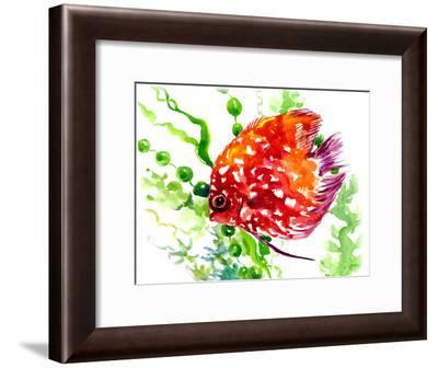 Discus Fish 1-Suren Nersisyan-Framed Art Print