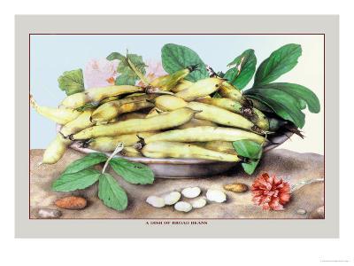 Dish of Broad Beans-Giovanna Garzoni-Art Print