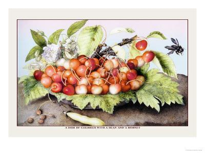 Dish of Cherries with a Bean and a Hornet-Giovanna Garzoni-Art Print