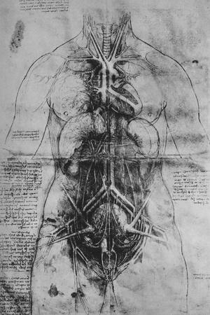 https://imgc.artprintimages.com/img/print/dissection-of-the-principal-organs-of-a-woman-c1480-1945_u-l-q1elsiv0.jpg?p=0