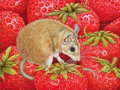Strawberry-Mouse, 1995 by Ditz