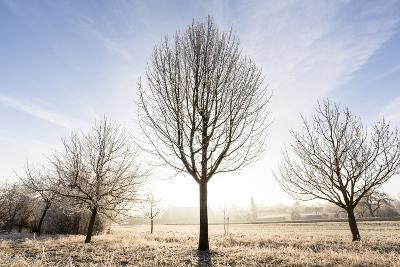 Ditzingen, Baden-Württemberg, Germany: Wintery Landscape In Morning Covered Fog & Frost-Axel Brunst-Photographic Print