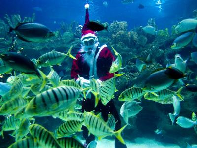 Diver Dressed as Santa Claus Feeds Fish as Part of Christmas Celebrations, Aquarium in Kuala Lumpur--Photographic Print