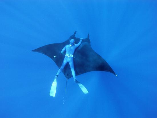 Diver Holds On To Giant Manta Ray Mexico Photographic Print By