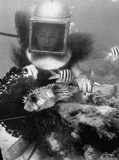 Diver Meddling Around with a Blowfish in Hartley's Underwater Movie in Bermuda-Peter Stackpole-Photographic Print