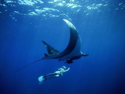Diver Swims with Giant Manta Ray, Mexico-Jeffrey Rotman-Photographic Print