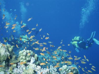 Divers Enjoy the Beauty of the Reefs and Marine Life in the Red Sea-Peter Carsten-Photographic Print